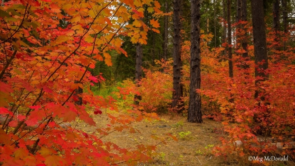 State's drought could spell early end to autumn leaves displays
